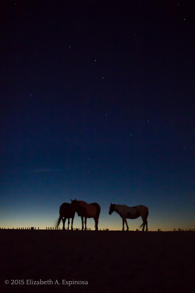 Ursa & Equid - Art Photography